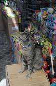 gatto di istanbul